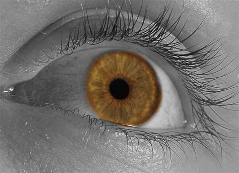 eye changing color changing eye color by jhhwild on deviantart