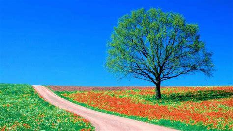 stassen fiori fondo pantalla primavera camino arbol
