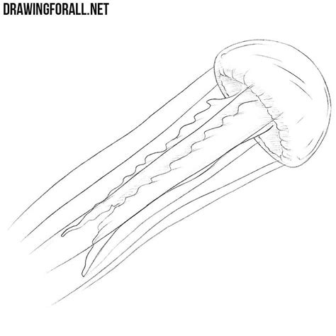 Drawing Jellyfish by How To Draw A Jellyfish Drawingforall Net