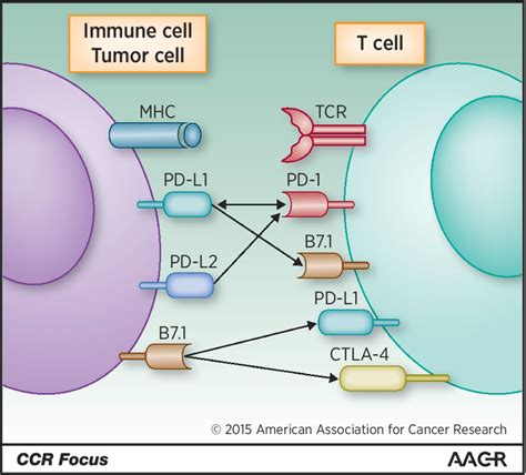immune checkpoint modulation for non small cell lung cancer clinical cancer research