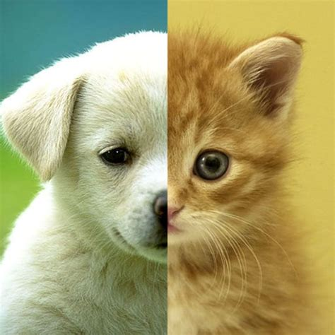 cats dogs wallpapers hd cute puppies kittens