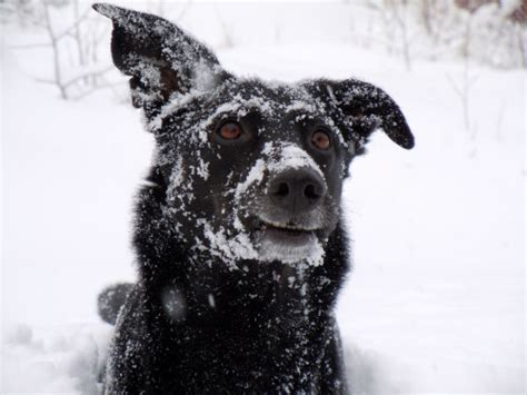 puppy has a cold 10 tips to protect your from freezing paws petslady