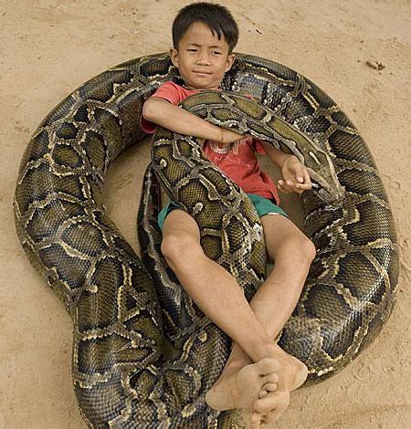Sleeper Slang Terareptilium Cz Zaj 237 Mavosti Ze života Hadů