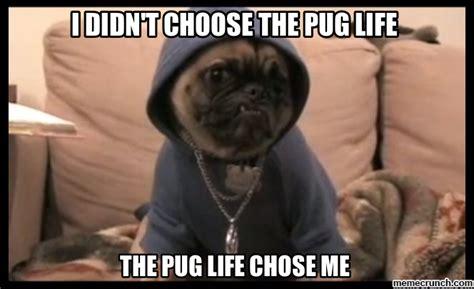 Pug Meme - the pug life