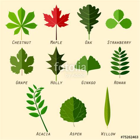 quot simple silhouettes of leaves with names of plants in flat