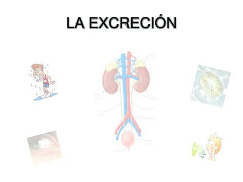 sistema excretor slideshare aparato excretor