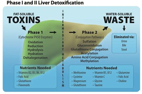 Detox Soluble Toxins by Detoxification And Liver Health Health Interlink