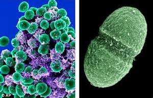 Living With Germs healthy their bodies with 10 000 species of