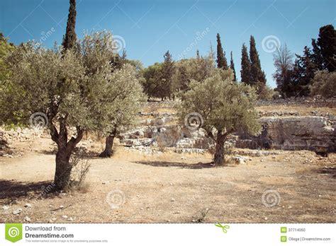 Olive Garden Mountain olive mountain gethsemane garden israel stock photo image 37714060