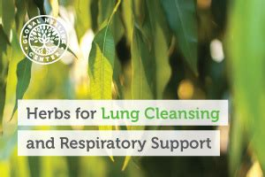 Lung Detox Herbs by The 9 Best Herbs For Lung Cleansing And Respiratory Support