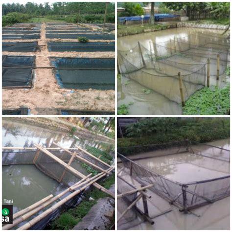 Jaring Paranet Bandung pemanfaatan waring dalam peternakan ikan lele