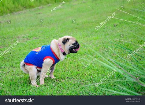 nature of pug pug against nature stock photo 149770940