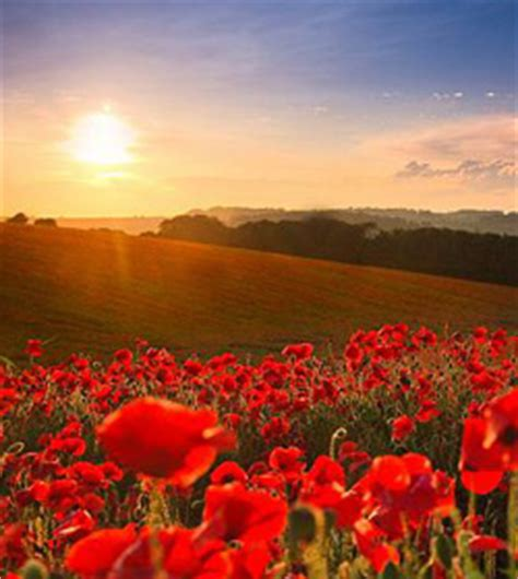 anzac day 2018 public holidays & special occasions in
