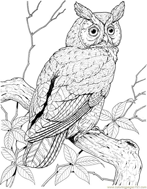 detailed owl coloring page free coloring pages of detailed owl