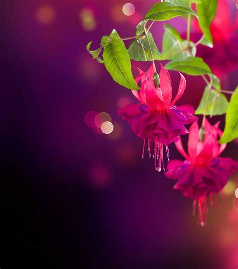 imagenes romanticas mas lindas del mundo flores hermosas del mundo hd imagui