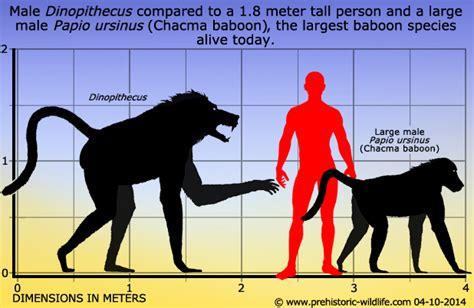 ancient mammals shrank during global warming event daily dinopithecus ancient mammals prehistoric