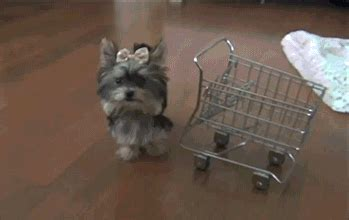 yorkie gif shopping gif find on giphy