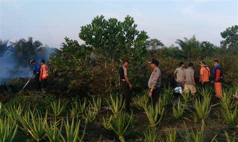 detiknews kebakaran hari ini 4 hari terakhir kebakaran hutan meluas di kalbar hari ini