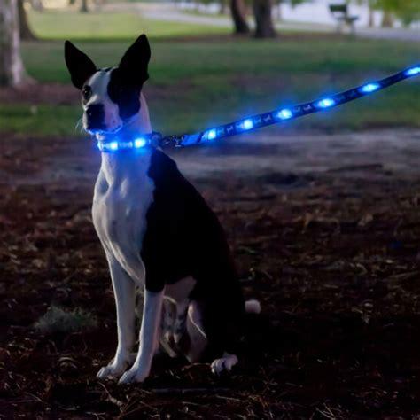 dog leash with light led light up dog leash shut up and take my money