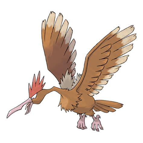 fearow | pokémon wiki | fandom powered by wikia
