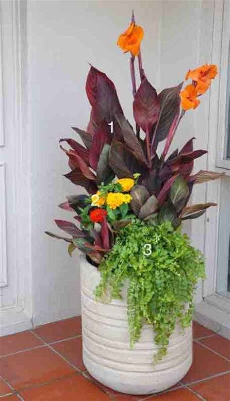 tropical container garden top 7 ideas about container gardening ideas on
