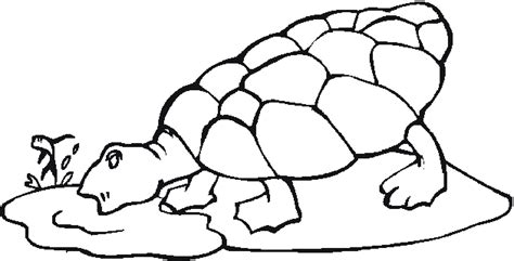 pet turtle coloring page free pet coloring pages