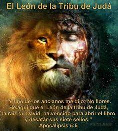 imagenes de leones con frases de amor 1000 images about cristo on pinterest dios biblia and fes