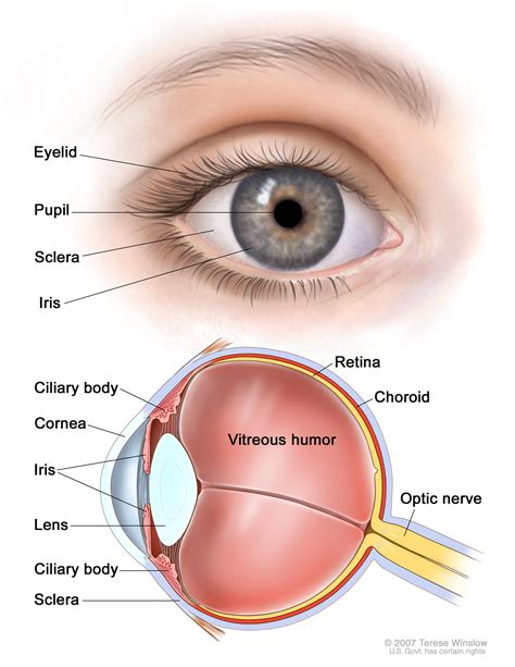 eyeball diagram intraocular uveal melanoma treatment pdq 174 patient