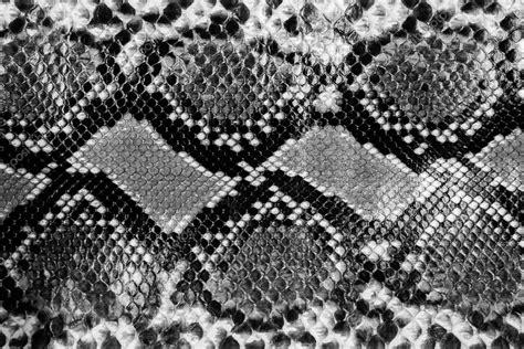 snake pattern black and white snake skin stock photo 169 chayathon 35198033