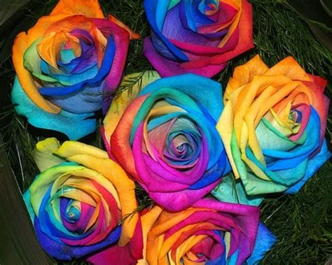 colorful roses colorful roses hd wallpapers pulse