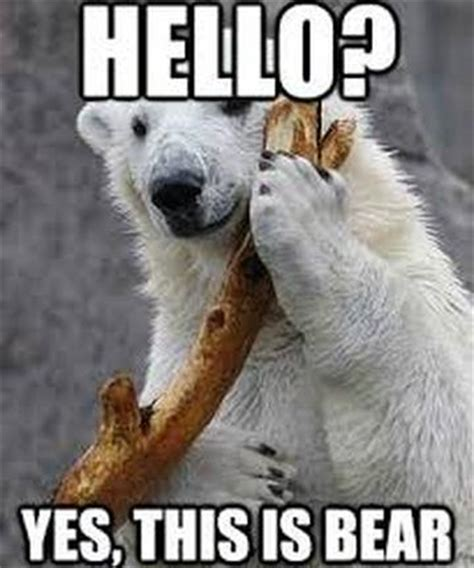 Funny Bear Meme - 35 most funniest bear meme pictures and photos