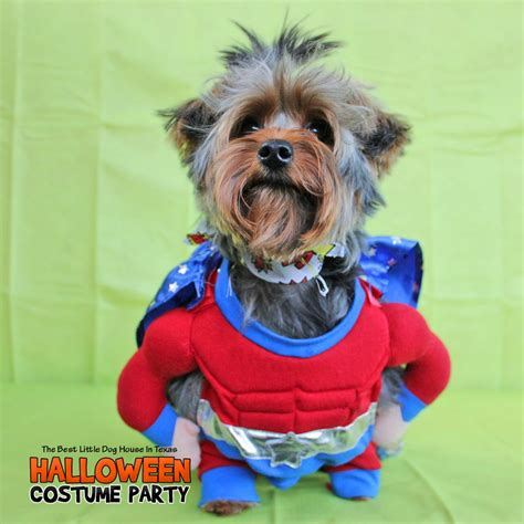 best little dog house in texas teddy halloween 2016 yelp