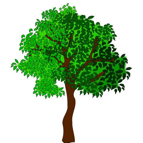 tree image clipart tree 17