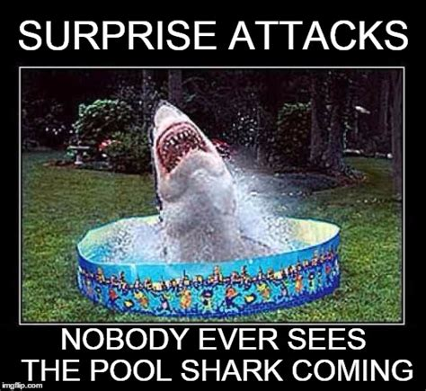 Shark Attack Meme - we re gonna need a bigger pool imgflip