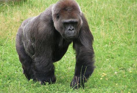 imagenes los animales en peligro de extincion 10 animales en peligro de extinci 243 n hotbook