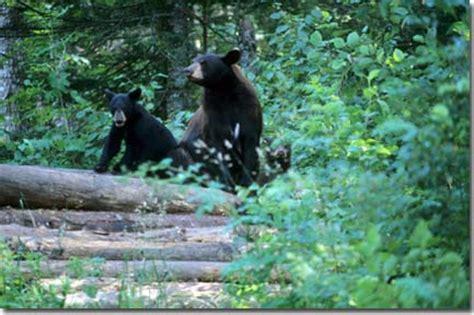 kentucky department of fish & wildlife black bears