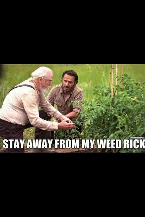 25 funny walking dead memes quotes words sayings