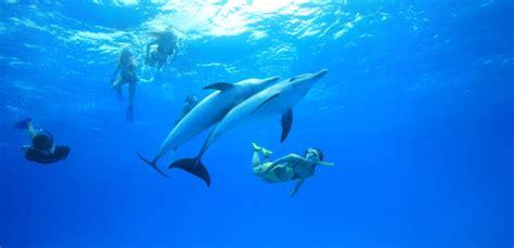 bagno con delfini snorkeling con i delfini alle isole azzorre