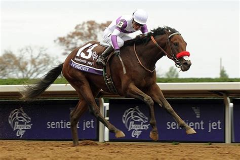 the horse the epic when is preakness stakes where how to watch the race hollywood life