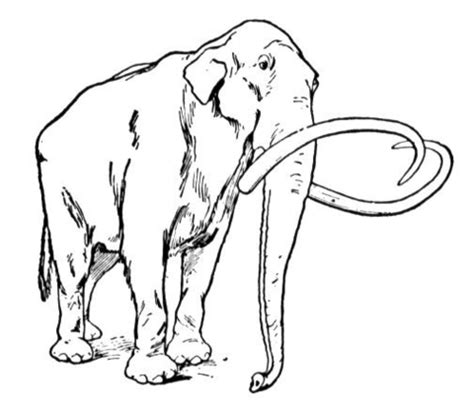 how to draw mammoth