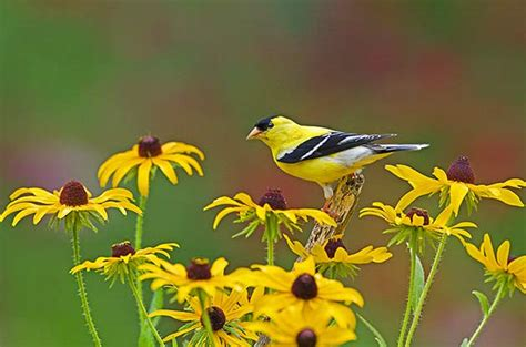 plants that attract birds trees that attract birds
