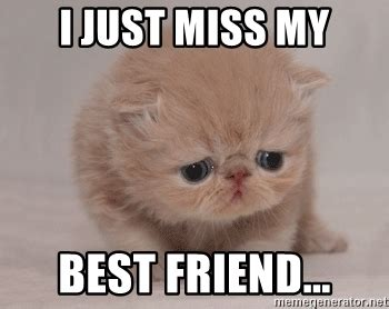 My Best Friend Meme - i just miss my best friend super sad cat meme generator