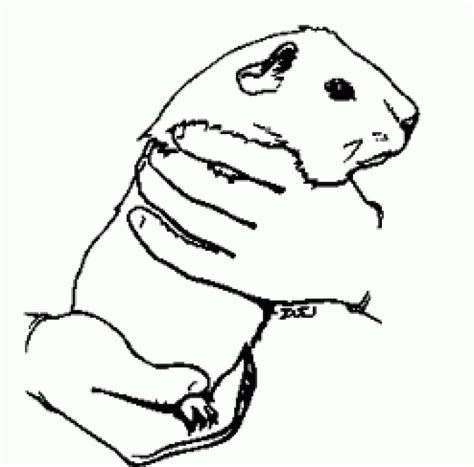 coloring page of a guinea pig guinea pig coloring page we used this to make a pet