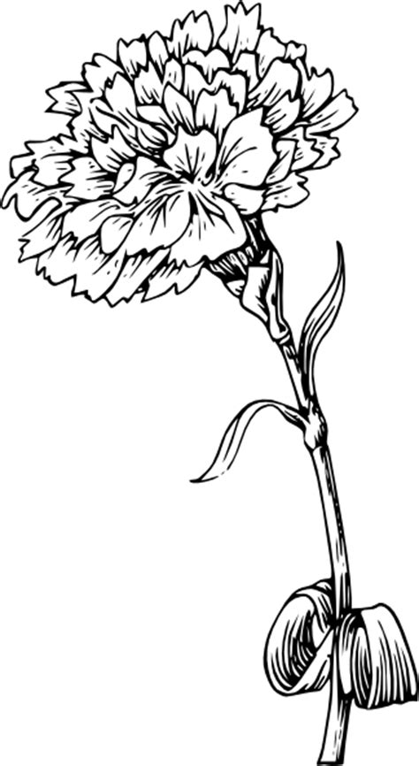 pink carnation tattoo design carnation pictures pics images and photos for inspiration