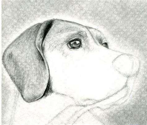 imagenes a lapiz de animales 17 best ideas about aprender a dibujar animales on
