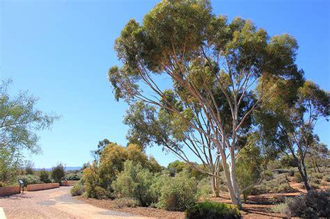 Arid Lands Botanic Gardens Arid Lands Botanical Gardens Port Augusta South Australi Flickr Photo