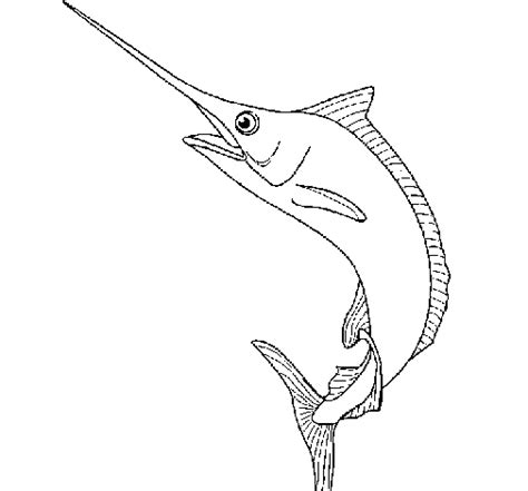 Swordfish Coloring Page colored page swordfish painted by 132