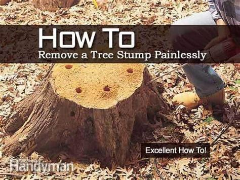 how to kill roots how to remove a tree stump painlessly