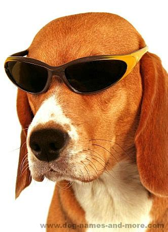 cool names for dogs cool names for the coolest or puppy beagle and animal