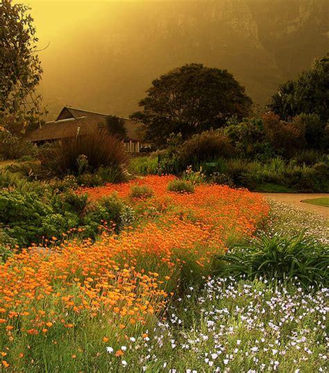 Pictures Of Kirstenbosch Botanical Gardens Kirstenbosch Botanical Gardens